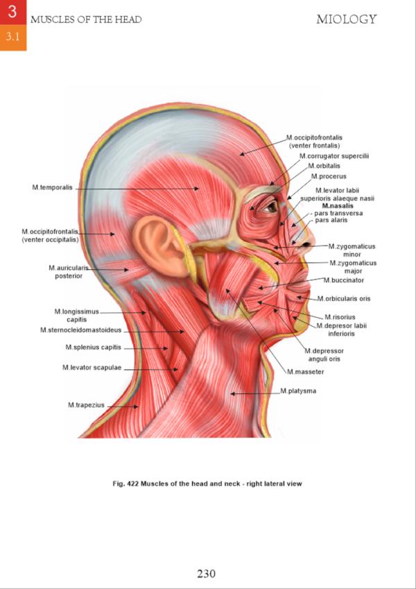 miologie- muschii capului